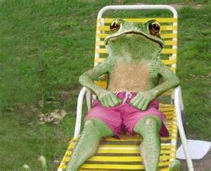frog lounging
